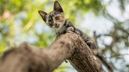 Cat Stuck in a Tree — Call a Tree Professional