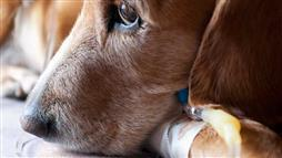 Highly Contagious Disease Still Threatens These Pets