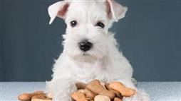 Your Dog's Top Treat Choices - Are They in Your Fridge?