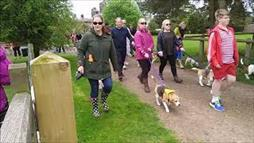 'Beaglelandia' Dog-Walking Event Is a Guinness Record-Breaker