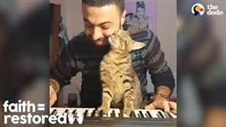 Rescue Cats Treated to Piano Lullabies
