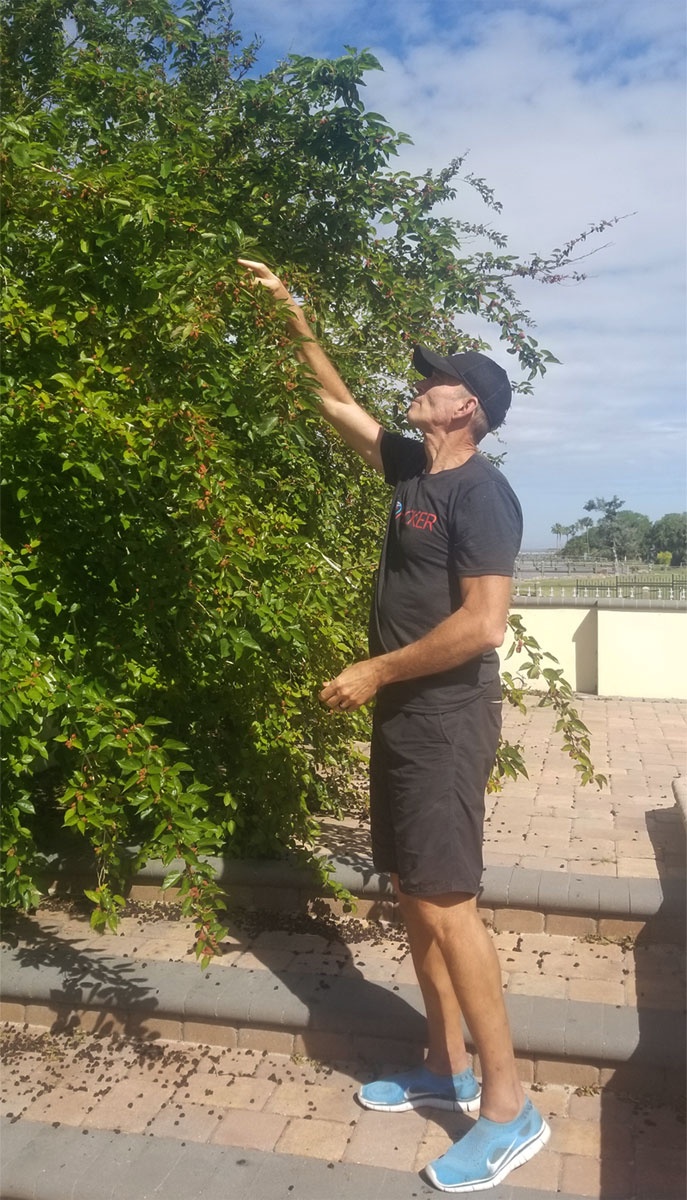 Dr. Mercola Picking Mulberry