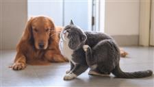 how to reduce pet allergens in home
