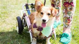 assistive devices for pets
