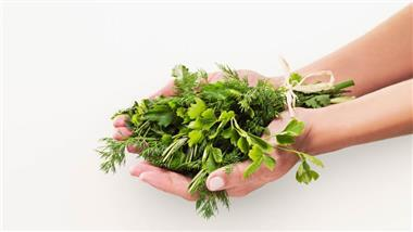 cilantro and coriander seed health benefits