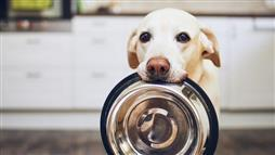 changing pet foods