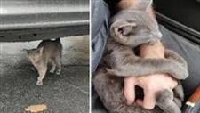 When His Car Broke Down, a Hungry Kitten Found Him
