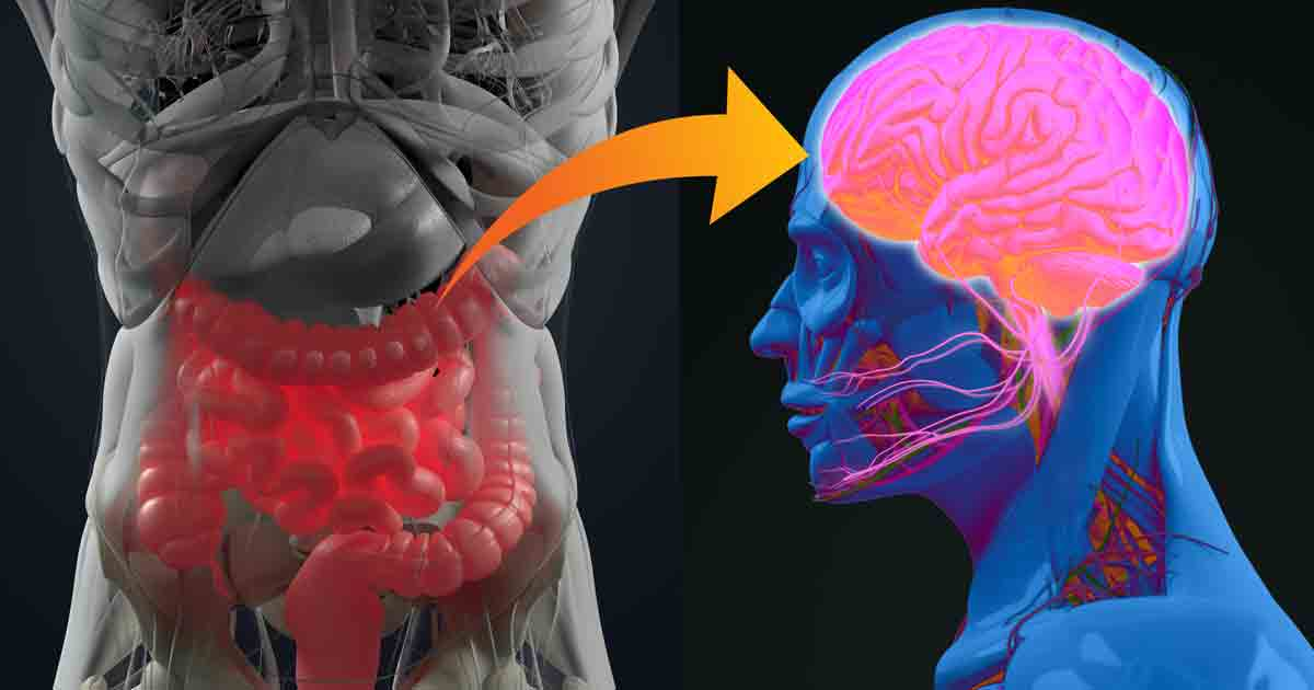The Gut's Role in Parkinson's Disease