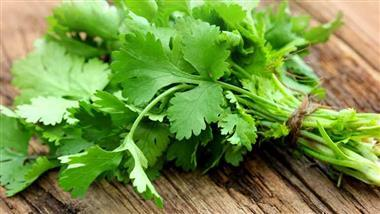 Cilantro: Why You Should Choose This Unique, Pungent Herb