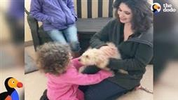 Dog Gone 19 Months Reunited With Her Family