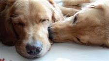 Dogs Have to Sleep With Their Faces Touching