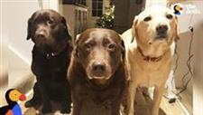 Senior Dog�s Whole Family Carts Her Around