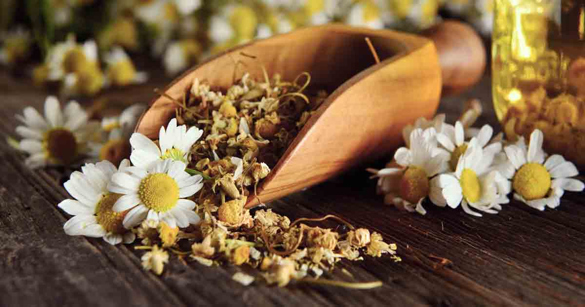 Chamomile: Benefits, Uses and Recipe