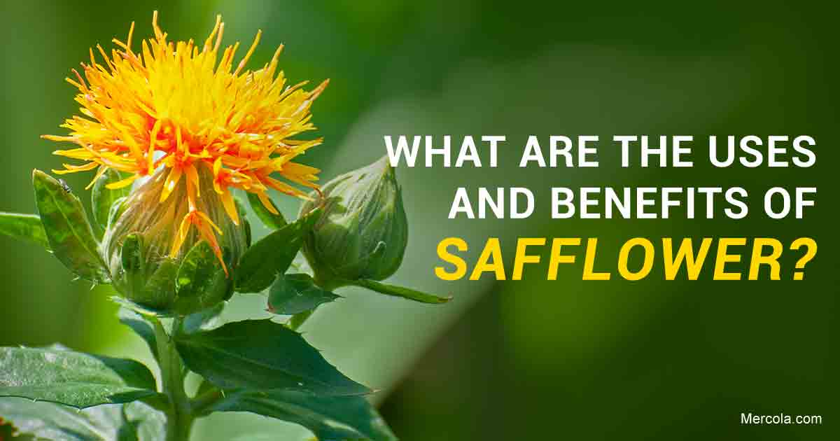 What Are the Benefits and Uses of Safflower?