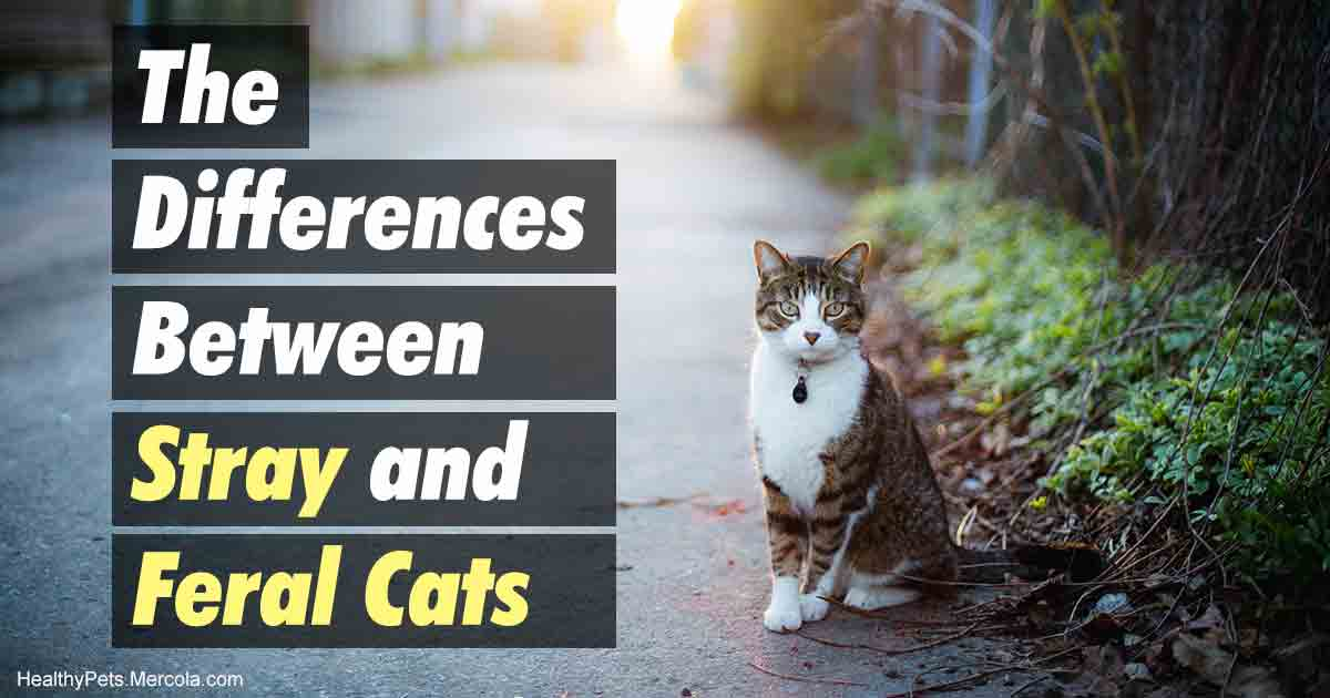 Stray or Feral Cat? Here's How to Tell the Difference