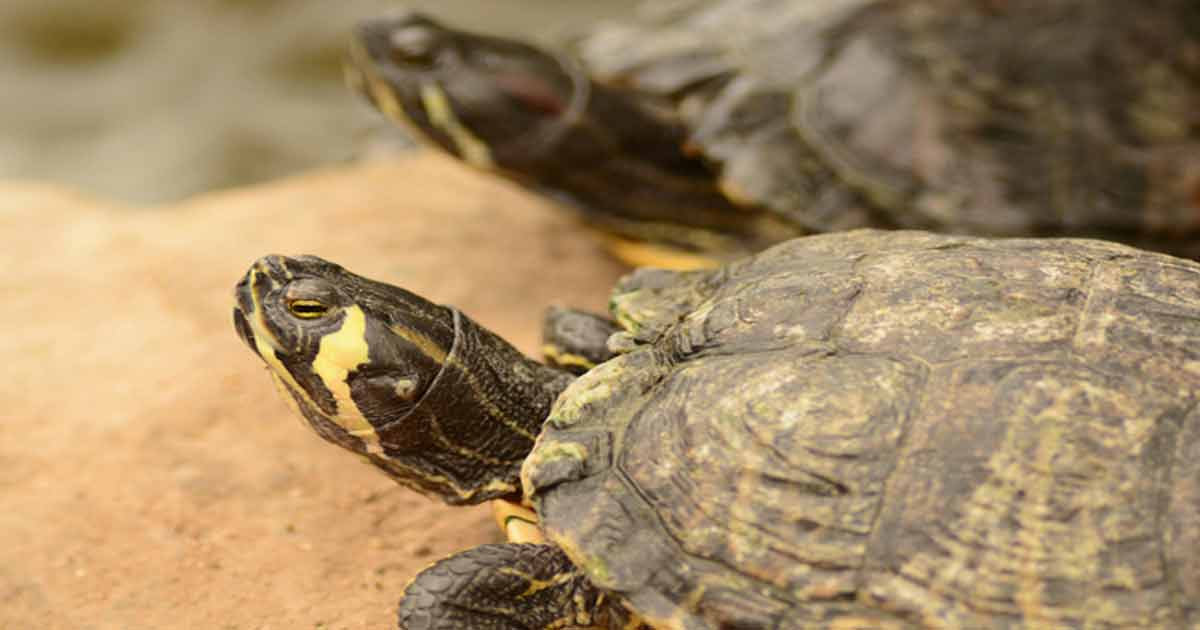 Turtles as Pets: What You Need to Know to Keep Them Healthy