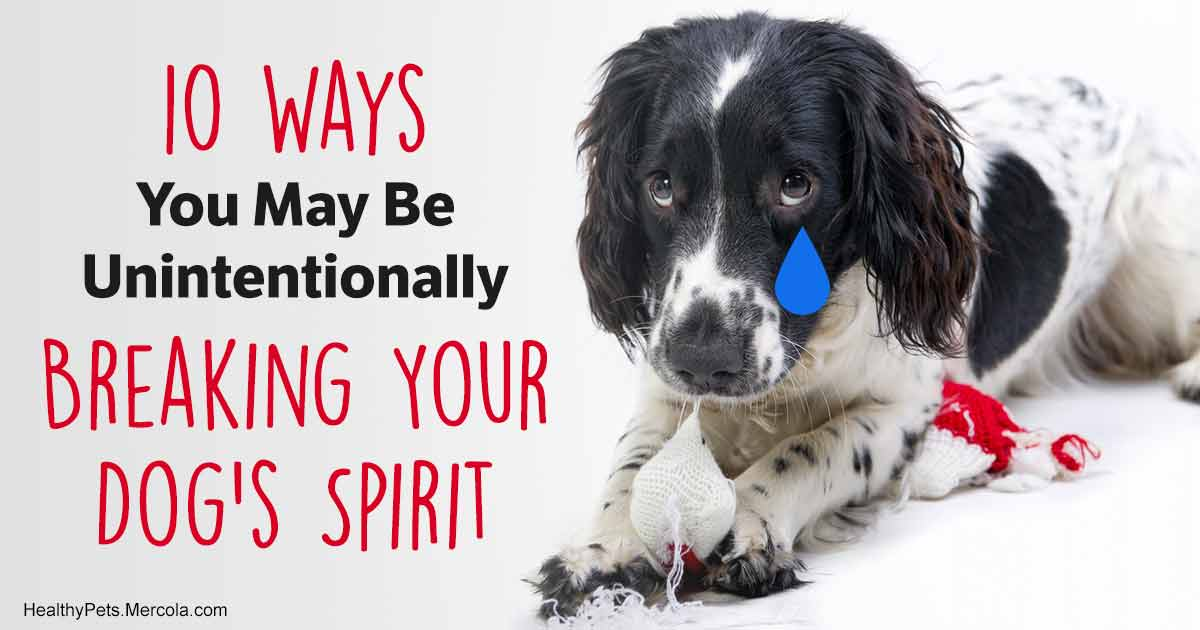 47f1bbf7 10 Actions That Can Break Your Dog's Spirit