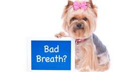 Alert Issued About Doggy Bad Breath: Never, Ever Do This