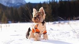 Telltale Signs Your Dog Is Too Cold and Needs a Winter Wardrobe