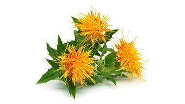 Safflower: An Economically Important Herb That Can Benefit Both Humans and Animals Alike