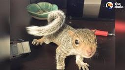 Baby Squirrel Becomes Queen of the House
