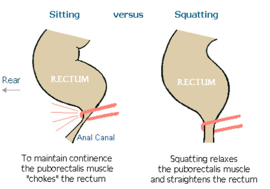 sitting versus squatting