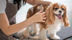 The key to your dog's shiny coat and healthy skin