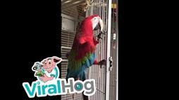 Macaw gets his groove on