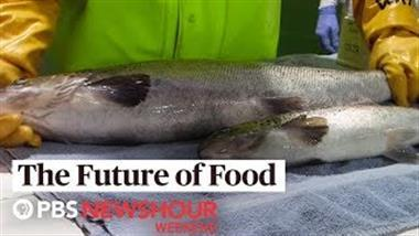 Genetically engineered salmon on your plate without your knowledge