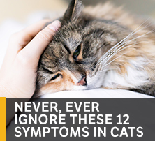 Symptoms in Cats