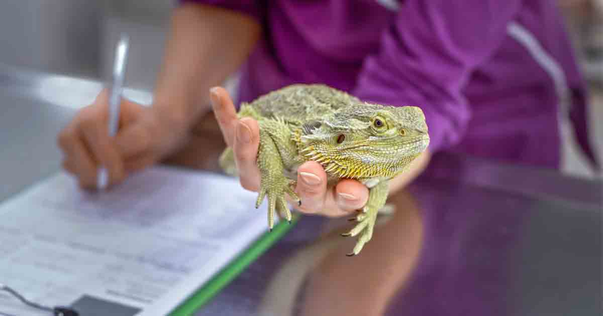 How Long Do These Exotic Pets Live?