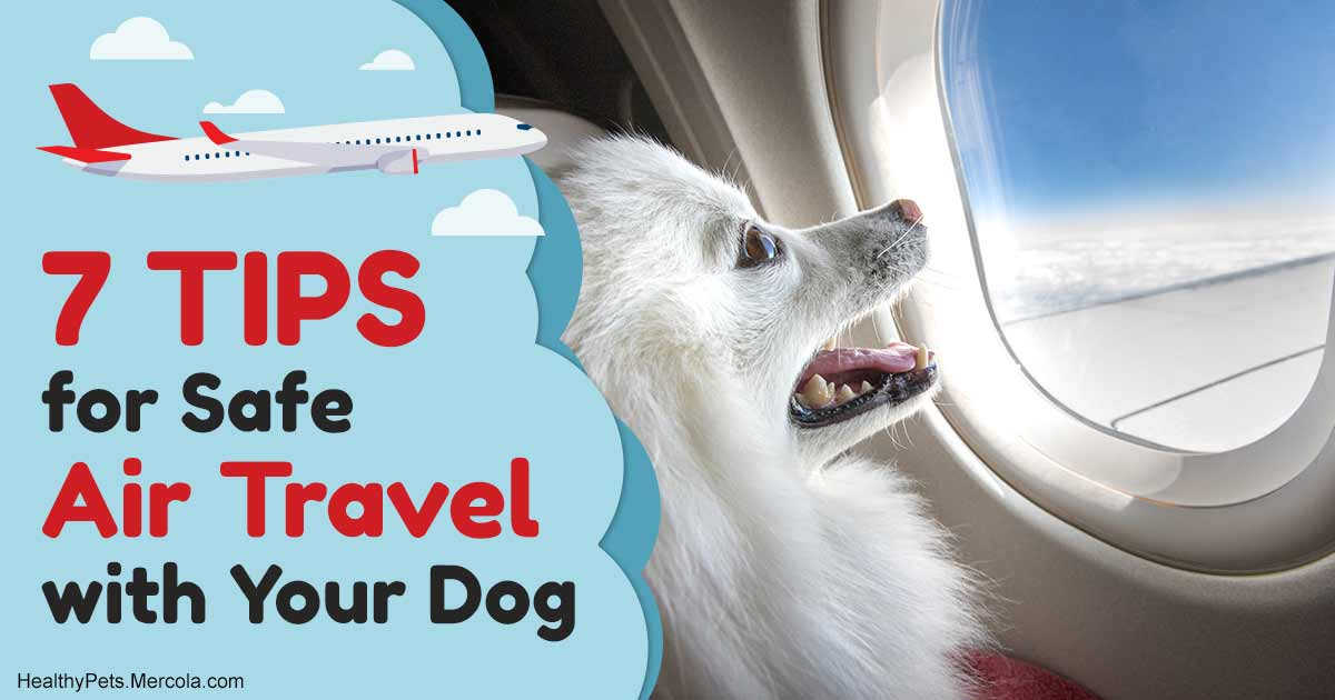 7 Tips for Safe Air Travel With Your Dog