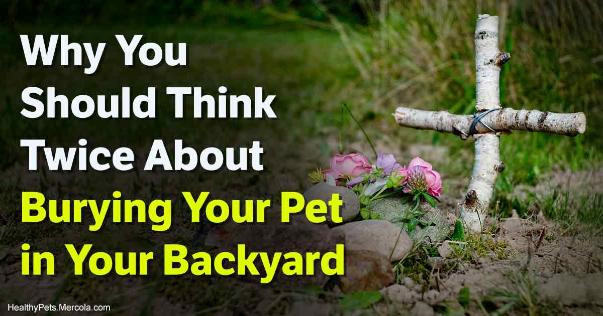 Backyard Burial For Pets Health Risks