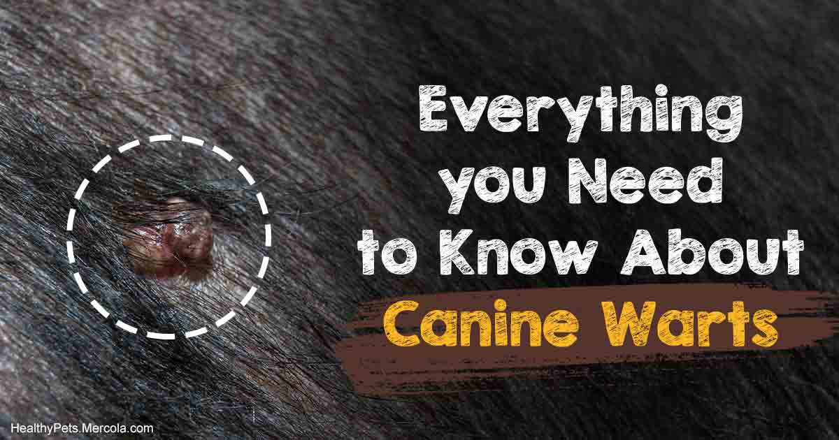 Canine Warts