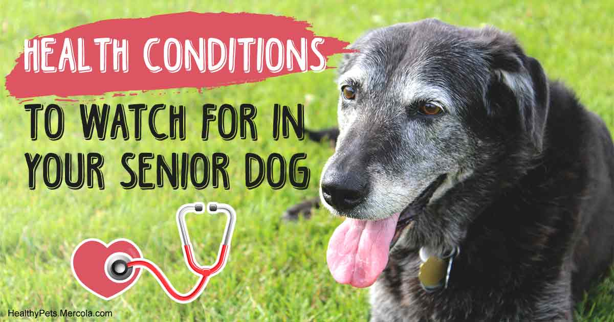 Older Dog Health Issues