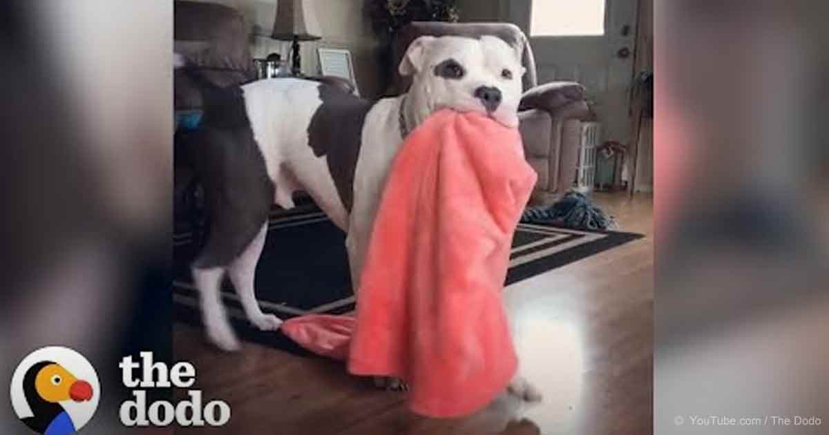 These dogs carry stuff when they're excited