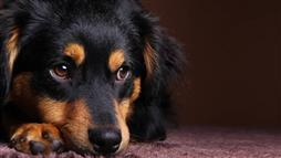 Has your pet suffered a concussion?