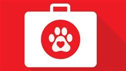 Do You Have a Pet First-Aid Kit?