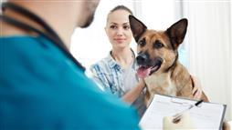 Is pet insurance worth the cost of premiums?