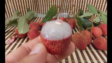 How to grow lychee