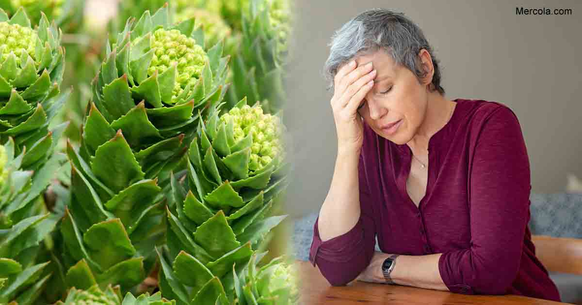 Rhodiola Reduces Fatigue