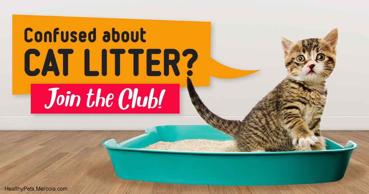 Confused About Cat Litter Join The Club