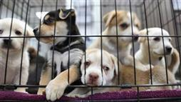 5 Ways You Can Help Eliminate Puppy Mills