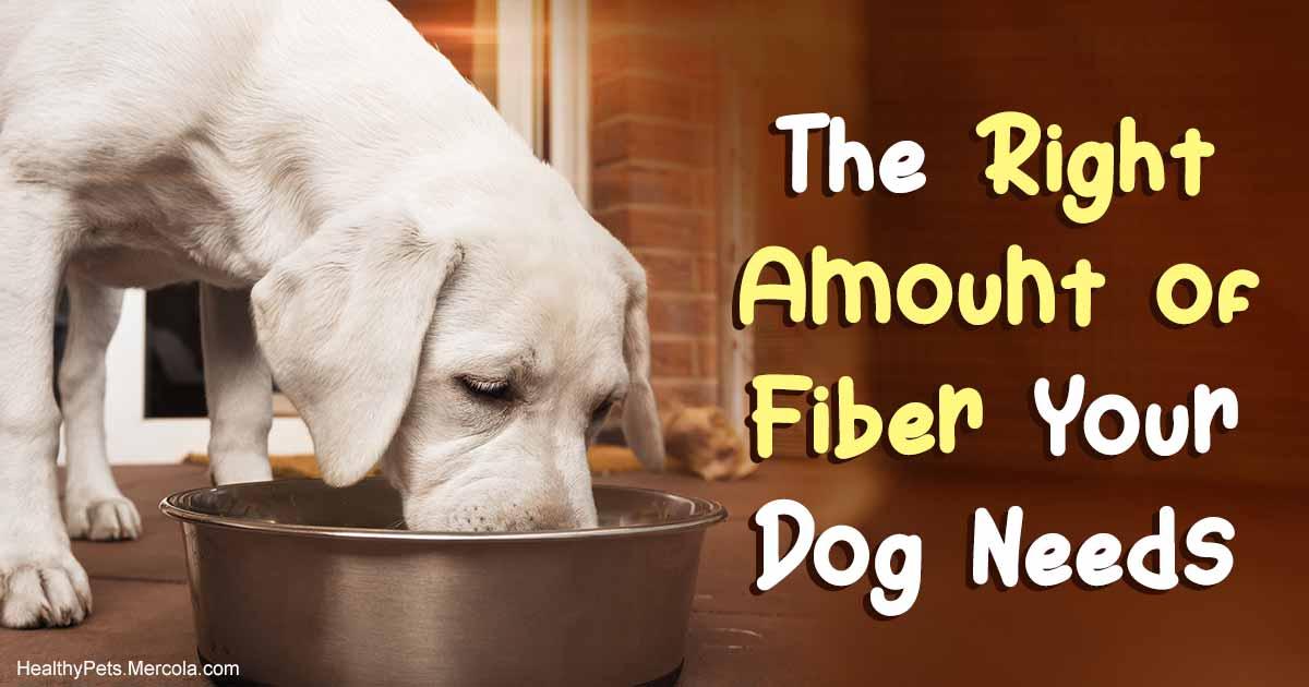 Adding Fiber to Your Dog's Diet