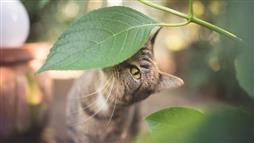 herbs for cats health
