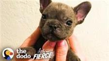 Puppy With a Cleft Palate Is so Cute When He Argues