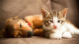 dog and cat skin diseases