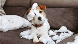 chewing behavior in dogs