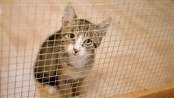 upper respiratory infection in shelter cats