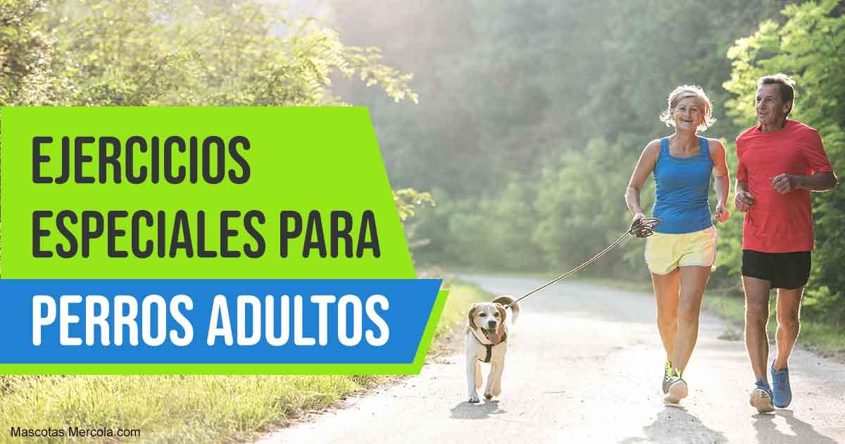 Estiramientos para perros mayores